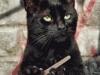 cat-filing-nails